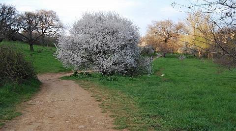 Bir Park Daha Cami Oluyor