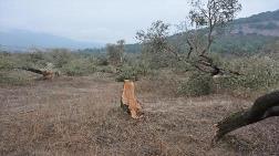 6 Bin Zeytin Ağacı için 10 Yıl Gerekiyor