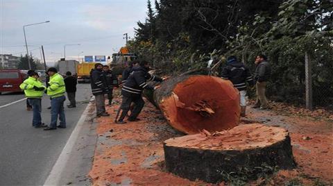 Yalova Belediyesi'nden Ağaç Katliamı Açıklaması