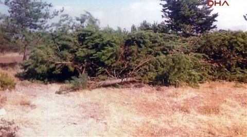Üniversitenin Ağaç Katliamına Mahkeme 'Dur' Dedi