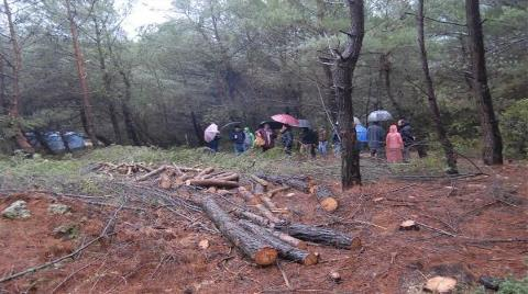 Urla'daki Ağaç Katliamına Mahkemeden Durdurma Kararı