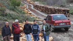 'Seyreltme' Diye Binlerce Ağaç Kesildi, Ortada Orman Kalmadı