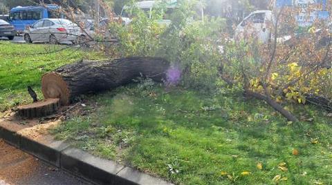 Yalova'da 192 Bin Ağaç Tehlikede