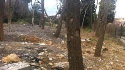 Vahdettin Köşkü Restorasyonunda Ağaçlar Kurudu
