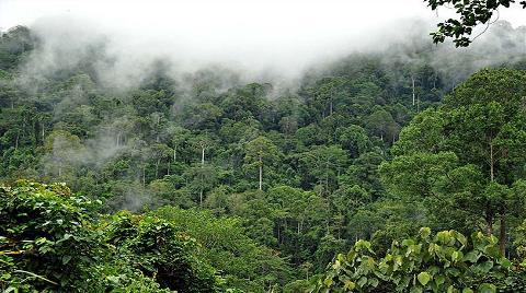 Brezilya Amazon Ormanları'nı Kamulaştırmayı Düşünüyor