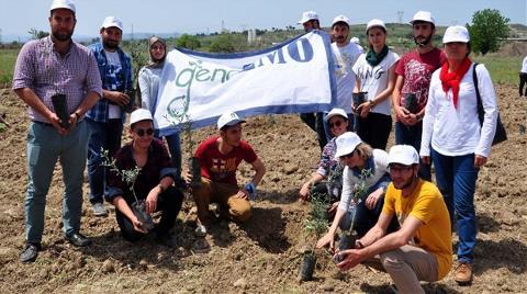 Yırca'da Sökülen Zeytinlerin Yerine Yenileri Dikiliyor