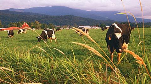 Yeni İklim Anlaşmasında Arazi Kullanma Sektörünün Rolü Ne Olacak?