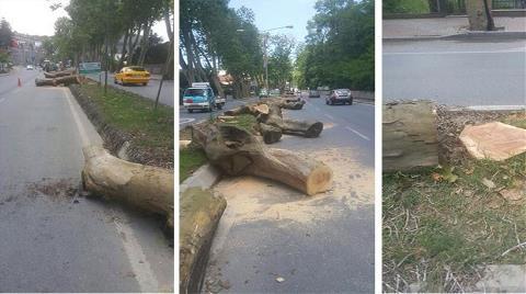 150 Yıllık Ağaçlara Kıydılar!