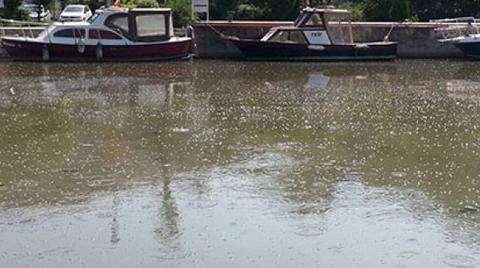 Kadıköy'de Islah Edilmeyi Bekleyen Kurbağalıdere Patladı