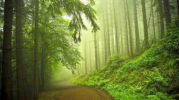 Yılda 15 Milyar Ağaç Yok Ediliyor