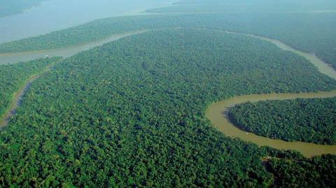 BM Raporu: Orman Kaybı Azaldı Ama Yetersiz