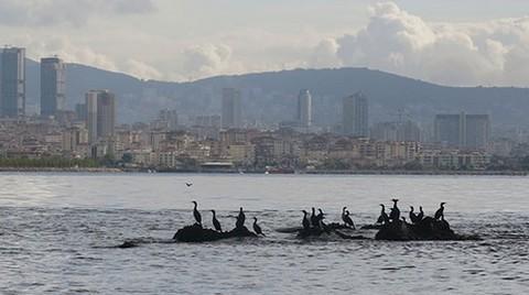 İstanbul'un Batık Adası Vordonisi Turizme Açılacak