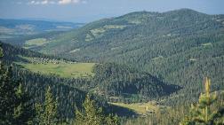 Köroğlu Dağları'nda Yeşil Katliamı Başladı