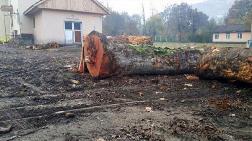 Burası Orman İşletme Şefliği!