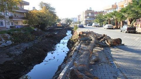 Dere Islahı Diyerek Ağaçları Kestiler