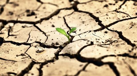 Dünya Toprakları Hızlı Bir Şekilde Bozuluyor