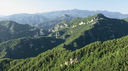 Ormanların Rehabilitasyonuna Avrupa Yatırım Bankası'ndan Kredi