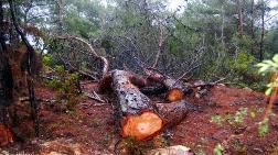 RES için Ağaç Kesmeyin