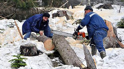 Orman Bakanlığı Cerattepe'de Ağaç Kesilmediğini İddia Etti