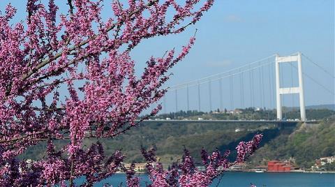 'İstanbul'un Simgesi Erguvan Olsun' Önerisi