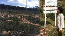 'Gölet için Binlerce Ağaç Kesildi'