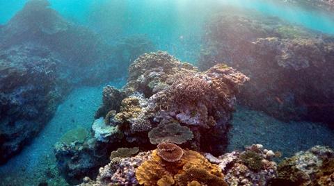 Tayland Doğayı Korumak için Mercan Adalarını Turizme Kapatıyor