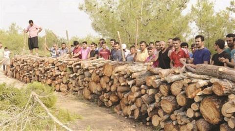 Köylüler Ağaçlar için Nöbete Başladı