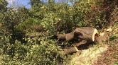 Kemerburgaz'da Ağaç Katliamı!