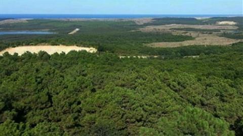 Maden Sahası için 60 Bin Ağaç mı Kesilecek?