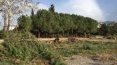 Bursa'da Hastane İnşaatı için 1100 Ağaç Kesiliyor
