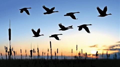 Kuşlara Göre Elektrik Hattı