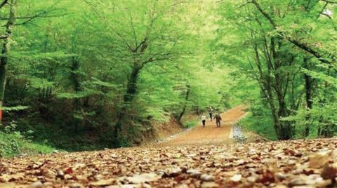 Belgrad Ormanı'nda Ağaçlara İşaret