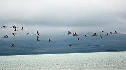 Küresel Isınma Kuşları Erken Göç Ettiriyor