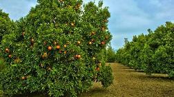 """Fethiye'de """"Portakal Bahçesine Cami Yapılsın mı?"""" Referandumu"""