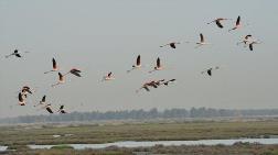 Tuzla Sulak Alanı için 'Kuş Cenneti' Projesi