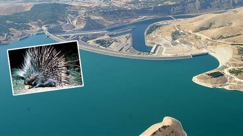 Bu Kirpi Baraj Durdurdu