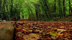 """""""Belgrad Ormanı En Vurucu Darbesini Alıyor"""""""