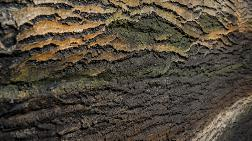 Artstone Paneller'de Bahar Esintileri