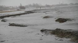 Van Gölü'nde Tehlike Çanları