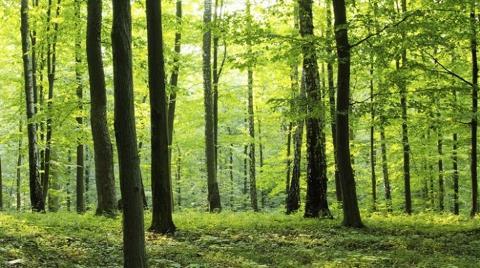 Endüstriyel Orman Miktarı İki Katına Çıkarılacak