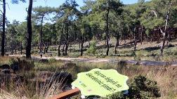 Protesto için Dikilen Sembolik Ağaçları Bile Kestiler