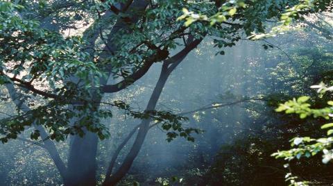 Ormanı Delik Deşik Edecekler