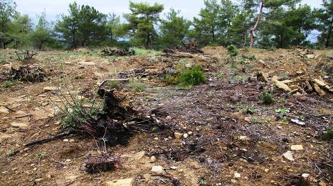 Manavgat'ta Orman Katliamı!