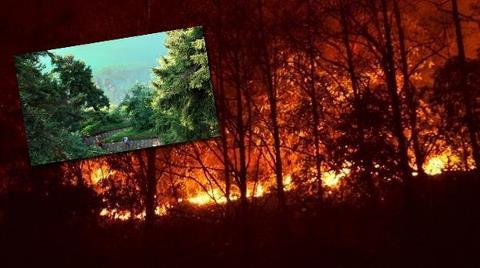 "Yanan Çamburnu Milli Parkı'nda ""İnşaat"" Tartışması"