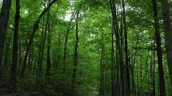 Aldığı Tarla Orman Çıktı