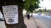 Çevrecilerden Ağaç Kesimine İlginç Tepki