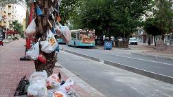 Palmiye Ağaçlarını Çöplüğe Çevirdiler