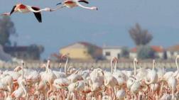 20 Bin Flamingonun Ürediği Gediz Deltası'na Otoyol Projesi!
