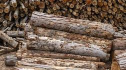 'Ağaç ve Orman Ürünleri'nde Hammadde Sıkıntısı