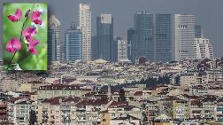 İstanbul'da Aşırı Yapılaşma Bitki Zenginliğine Tehdit